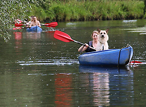 dog-event-kanu-1