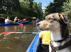 dog-event-kanu-2