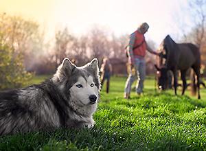 dog-event-reiten-2