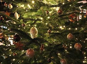 weihnachten-hundeschule-05