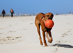 dog-event-texel-1