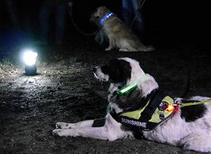 dog-event-vollmond-5