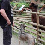 dosoco-walk-zoo_0456
