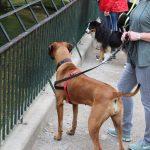 dosoco-walk-zoo_0459