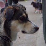 dosoco-walk-zoo_0460