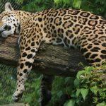dosoco-walk-zoo_0467