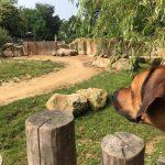 dosoco-walk-zoo_0468