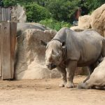 dosoco-walk-zoo_0469