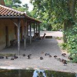 dosoco-walk-zoo_0472