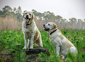 dog-walk-grooter-heide-4