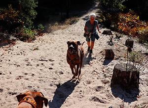 dog-walk-grooter-heide-6