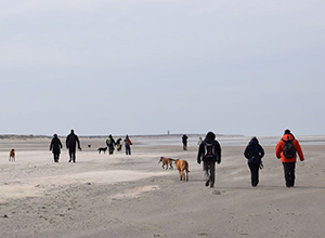 dog-walk-ouddorp-1