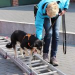Dog-Team-Tag-190414-31