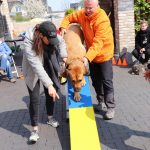 Dog-Team-Tag-190414-33