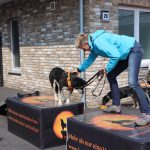 Dog-Team-Tag-190414-37