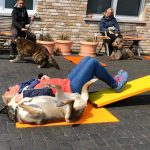 Dog-Team-Tag-190414-44