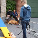 Dog-Team-Tag-190501-30