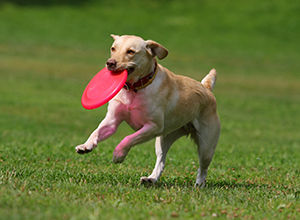 workshop-dog-frisbee-1