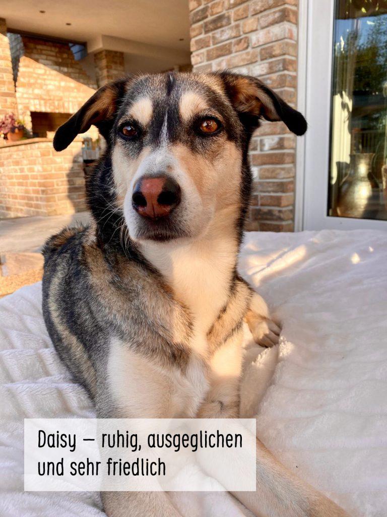05-daisy