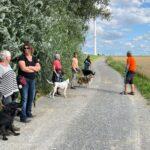 hundeschule-karlstedt-gruppenstunde-profis-juli-2021-01