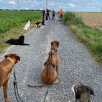 hundeschule-karlstedt-gruppenstunde-profis-juli-2021-03