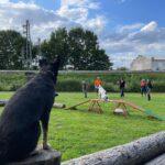 hundeschule-karlstedt-gruppenstunde-profis-juli-2021-06