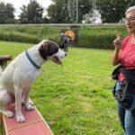 hundeschule-karlstedt-gruppenstunde-profis-juli-2021-07