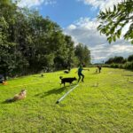 hundeschule-karlstedt-gruppenstunde-profis-juli-2021-09