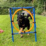 hundeschule-karlstedt-gruppenstunde-profis-juli-2021-12