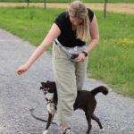 hundeschule-karlstedt-gruppenstunde-starter-juli-2021-12