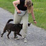 hundeschule-karlstedt-gruppenstunde-starter-juli-2021-13