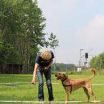 hundeschule-karlstedt-longieren-05