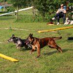 hundeschule-karlstedt-longieren-07