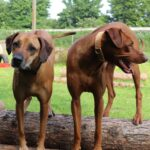 hundeschule-karlstedt-naturparcours-05