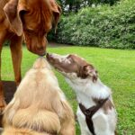 hundeschule-karlstedt-naturparcours-14