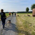 hundeschule-karlstedt-training-gelaende-08