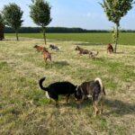 hundeschule-karlstedt-training-gelaende-10